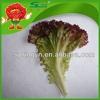Bulk frozen vegetables crystal hydroponic red leafy lettuce