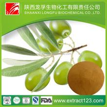 Manufacturer sales olive leaf extract powder