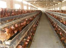 chicken wire cage /chicken raising system