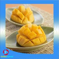 aseptic fruit puree mango Juice on hot sale