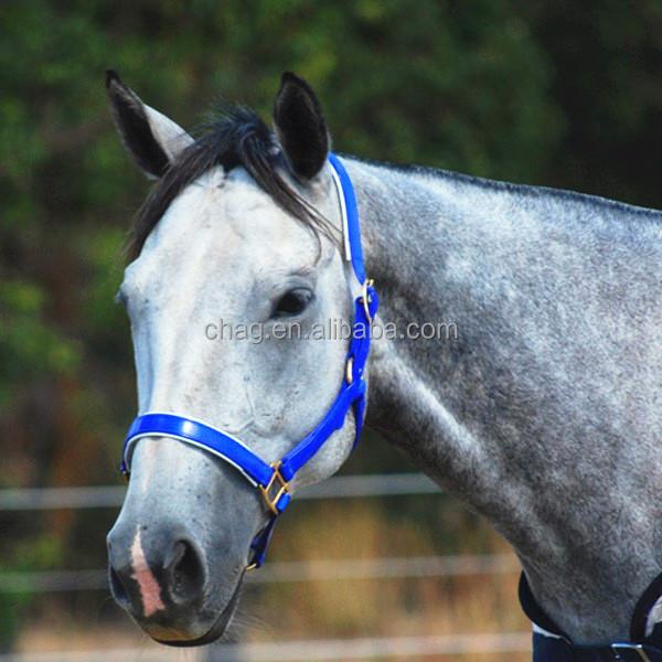 blue pvc horse halter 02