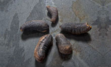 Dried Sea Cucumber