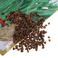High Quality 200Pcs Water Spinach Bamboo Large Leaf Organic Swamp Green Fresh Vegetable Seeds Balcony Garden Fruits Vegetables