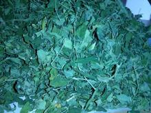 Moringa Oleifera Dried Leaf