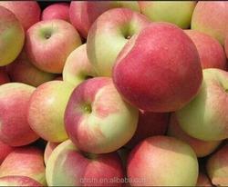 red fresh gala apple wholesale price
