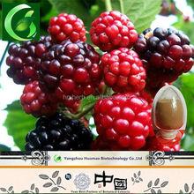 supply health care dry raspberry seeds extract ketone powder / freeze dried raspberry powder