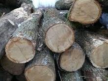 Oak,Eucalyptus wood,log,round log,logs,wood,lumber,pine logs