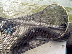 Made in China Steel fish trap