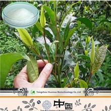 China ebay cany Tea extract 98% powder Dihydromyricetin