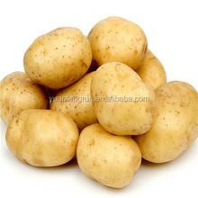 high quality and good price of fresh potato
