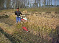 Popular on sale and easy operate new kubota mini harvester