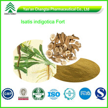 GMP Factory Supply Organic Radix Isatidis Extract P.E.
