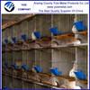 Cheap rabbit breeding cage,rabbit cage in kenya farm (Factory)