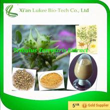 Private Label Tribulus Terrestris Extreme Standardized Extract 90%,95% saponins