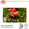 Bearberry Extract Alpha-Arbutin Extract Powder 98% Skin Lightening /Alpha Arbutin / Beta Arbutin Powder