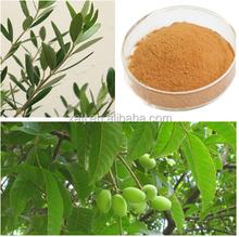 High purity natural Olive leaf powder/Olive leaf powder