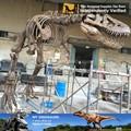 N-p-y-63-museum exposición animated esqueleto de dinosaurio marruecos fósil