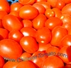 Organic Tomato paste, sauce, ketchup manufacture for usa