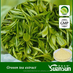 Pure natural green tea extract