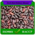 200-220pcs/100g nombre científico de frijoles de phaseolus vulgaris de color rojo oscuro judíasverdes