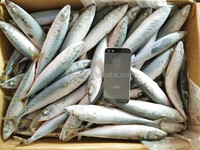 new frozen Scomber Japonicous fresh pacific mackerel fish