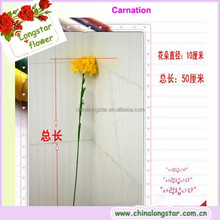 Single Carnation Flowers In The Vase Used For Mother's Day