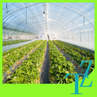 agriculture polythene greenhouse cover/polyethylene green house film cover/clear roofing cover film for greenhouse