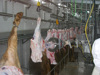500 cow slaughter line meat processing equipment