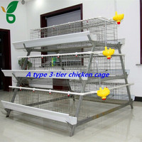 A type galvanized material chicken use poultry farm equipment
