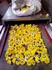 Wild chrysanthemum flower microwave dryer
