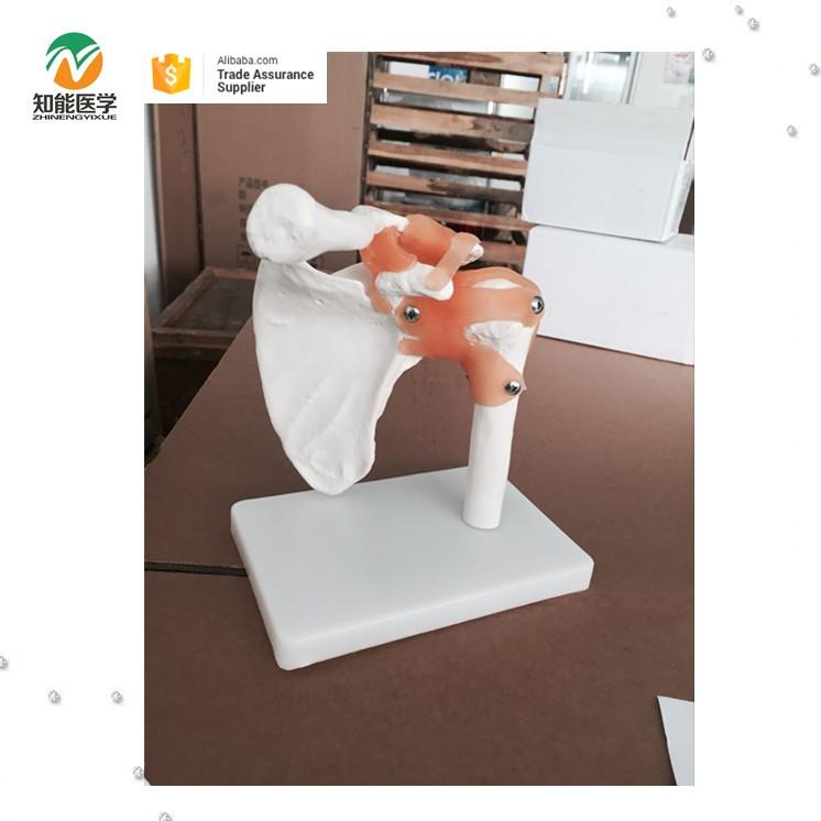 Artificial Vidid educativos modelo médico anatomía humana de la ...