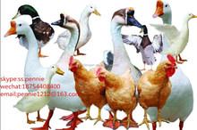 Feed Grade 98.5% L-threonine/factory food for pigs fish/chicken feeding
