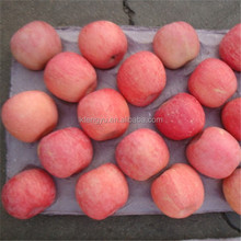 Best selling High quality delicous fresh red Fuji apple