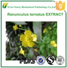 GMP certificated medicine Ranunculus Ternatus extract