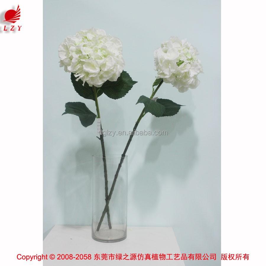 Wholesale Hydrangea Flowering Plants Rj Carbone Florals Hydrangea