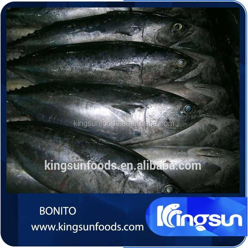 Fish bonito tuna whole round price cheap buy fish bonito for Tuna fish price