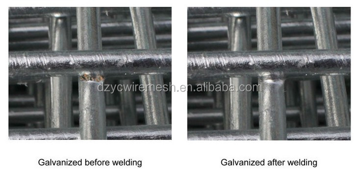 small bird cage wire mesh / welded wire mesh panel (manufacturer)