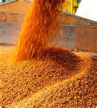Wholesale Low Price Yellow Corn Animal Feed