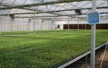 No Mark Bright Color Flower Pot Plastic Nursery Seedling Pots Plant Trays