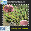 Pure Natural Red Prickly Pear Fruit Powder