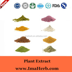 Excellent OEM Factory Supply bio green tea extract