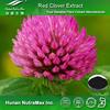 100% Pure Trifolium pretense Extract,Trifolium pretense Powder,Trifolium pretense P.E.