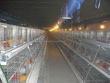 High Quality Broiler Chicken Cage,ISO Approved ,automatic bird cages /Broiler Chicken Cage