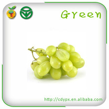 Export Seedless Crystal Glass Grapes