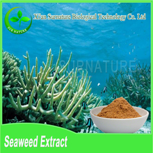 High quality green seaweed powder, seaweed extract