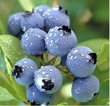 BV certificated manufacturer supply anthocyanin