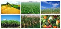 Soil fertility improve bio-organic effective granular organic fertilizer