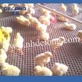 البلاستيك الدجاج/ بطة/ من معدات تربية الدواجن شبكة الأرانب