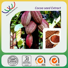 China Herbal extract Leading supplier cocoa seeds extract polyphenols , cocoa polyphenols 40% , good cocoa powder price