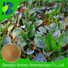 2015 GMP Certified Asiatic Plantain Herb Extract
